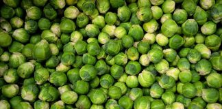 why you should eat more Brussels sprouts
