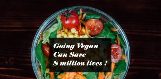 Going Vegan Can Save 8 million lives